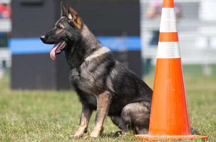 Police K9 Safety Awareness
